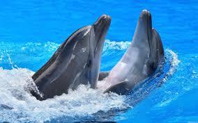 dolphin house marsa alam travel u0026 transportation