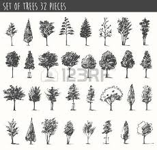 8 541 birch tree cliparts stock vector and royalty free birch