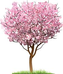 cherry blossom tree clip vector images illustrations istock