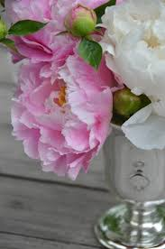 where to buy peonies the princess and the frog peonies and a mercury glass vase