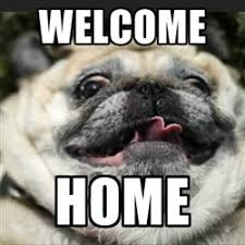 Welcome Home Meme - 102 best pugs images on pinterest funny animals crafts and doggies