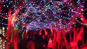 Stoneham Zoo Lights by 100 Lights Zoo Zoolights Stone Zoo Colorado Holiday Lights