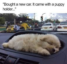 New Car Meme - 20 funny memes of cats dogs and moving vehicles i can has