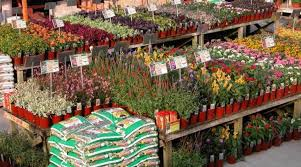 Home Depot Flower Projects - projects idea of home depot winter garden interesting ideas