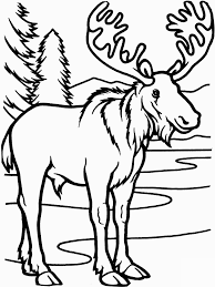bold design moose coloring pages printable print zee book