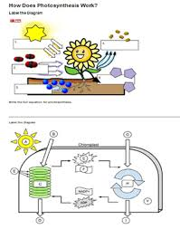 how does photosynthesis work