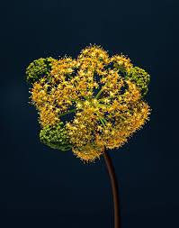 strangers flowers strangers a stunning photos series by erwan frotin capturing the