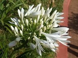 Fragrant Plants List - top 10 fragrant flowers in india scented flowers smelling flowers