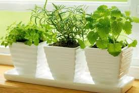 plants at home 7 plants to keep your house fresh and pollution free organic planner