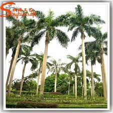 Palm Trees Fruit - all kinds of evergreen tropical fruit trees artificial giant