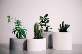 set of 4 round concrete planters windowsill cachepot