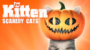 halloween cats background kittentv scaredy cats youtube