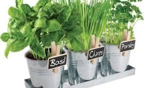 how to start a small indoor herb garden all 4 women
