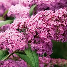 Image Flower Garden by Best Flowers For Bees U0026 Butterflies Sunset