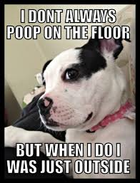 Dog Poop Meme - 10 hilarious dog memes to save the day