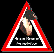 boxer dog for adoption aabr available dogs