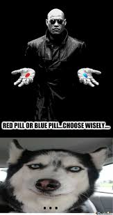 Morpheus Cat Meme - just morpheus by recyclebin meme center