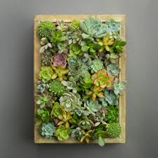 A Frame Kit by Easy Diy Succulent Living Picture Frame Kit Juicykits Com