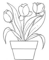 free tulip coloring pages tulip coloring pages