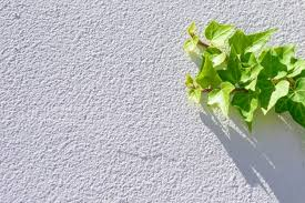 fresh ivy green leaves climbing on white textured wall background