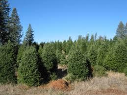 four winds christmas trees 19679 skyline blvd los gatos ca