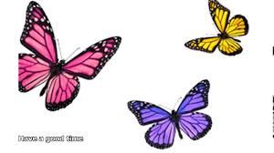 butterfly facts for kids youtube