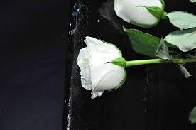roses freespywarefixescom