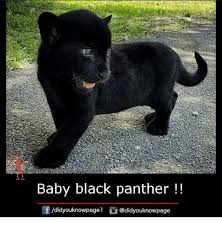 Funny Panthers Memes - 25 best memes about black panthers black panthers memes