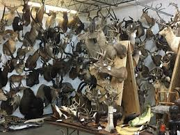 taxidermy home decor huge taxidermy sale and more texas hunting u0026 fishing lone star