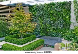 Small Urban Garden - a small enclosed urban garden with tree ferns and colourful
