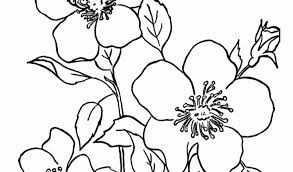 100 ideas free printable coloring pages of flowers on