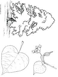 coloring pictures of a palm tree palm tree coloring pages idejezadvoriste info