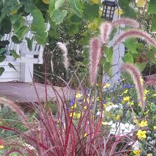 mid atlantic gardening gorgeous ornamental grasses