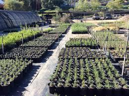 native plant nursery habitat restoration