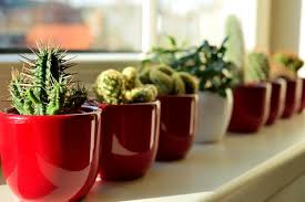 how well would a plant grow under pure yellow light cactus house plants grown under indoor grow lights your houseplants hq