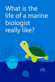 best 25 marine biology jobs ideas on pinterest marine biology