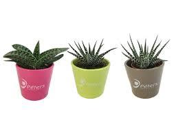 plante d駱olluante chambre chambre plante dépolluante plante dépolluante plante dépolluante