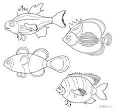 drawn fish ocean fish pencil and in color drawn fish ocean fish