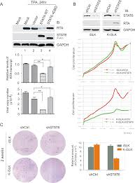 nuclear localization and cleavage of stat6 is induced by kaposi u0027s