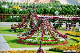 dubai miracle garden the world u0027s biggest natural flower garden