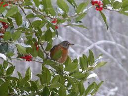 birds ii songbirds woodpeckers ground feeding birds