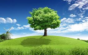 hq 1680x1050 resolution august 21 2015 green tree 626507