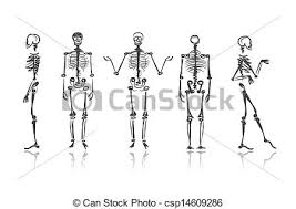 vector of skeleton sketches for your design csp14609286 search