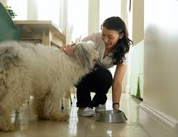 Bathtubs For Dogs How To Start A Dog Grooming Business