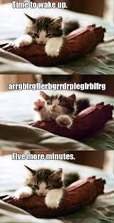 Funny Kitten Meme - amazing creatures 30 funny animal captions part 10 30 pics