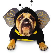 Dogs Halloween Costumes 268 Halloween Costumes Puppies Dogs Images