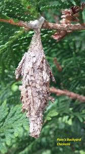 how to get rid of bagworms countryside network
