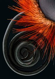 the best microscope photos of the year from nikon small world