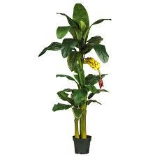 6 foot stalk banana tree with bananas potted 5226