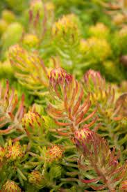 wildtype native plant nursery více než 25 nejlepších nápadů na pinterestu na téma wholesale